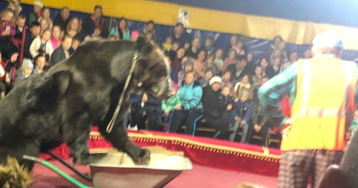 Медведь на глазах у детей напал на дрессировщика цирка в Карелии