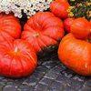 Это вам не Хэллоуин или что можно приготовить из тыквы