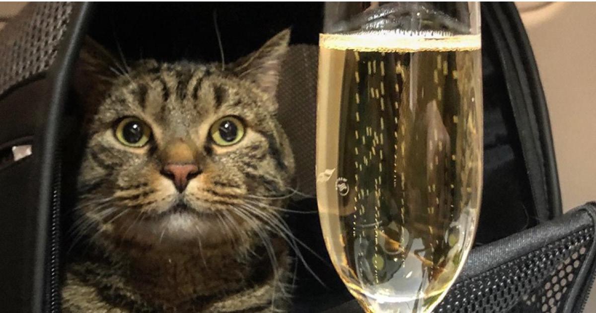 Фото Россиянин отказался от рейса ради своего кота: тот не проходил по весу