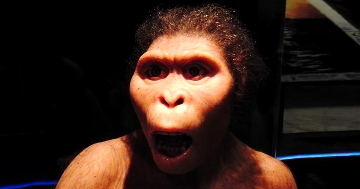 Фото Планета обезьян. Современные приматы умнее предков человека
