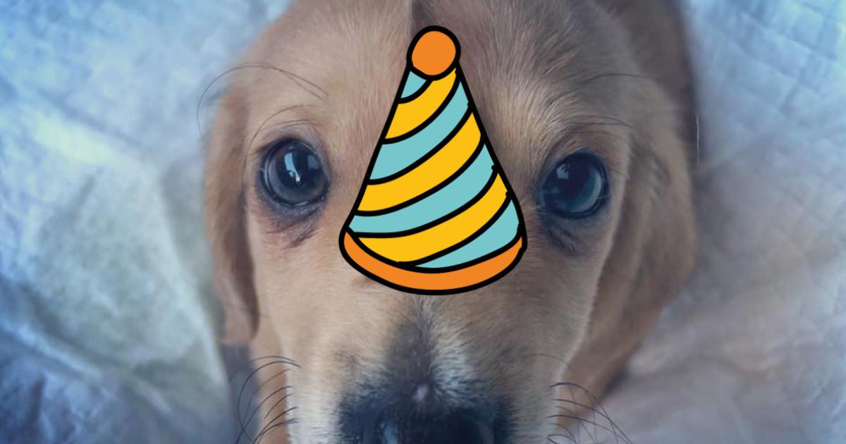 50% собаки, 50% единорога - щенок с хвостом на лбу покоряет Интернет