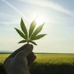Cannabis May Help Reduce PTSD-Related Depression, Suicide