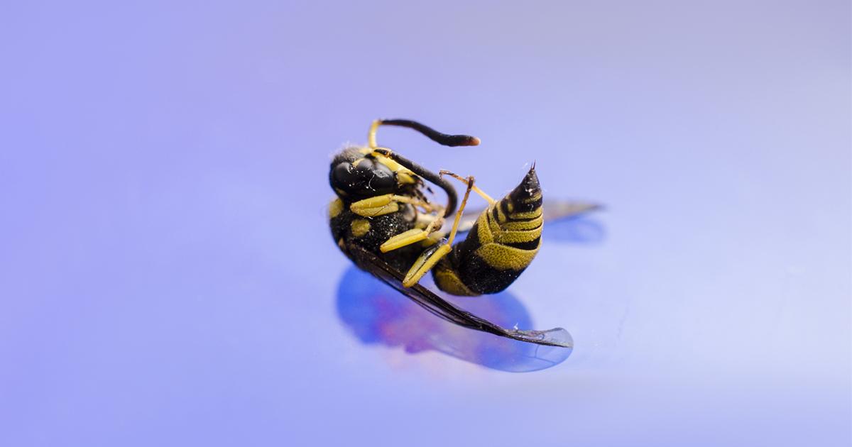 """Фото Ученые бьют тревогу: через четверть века случится """"апокалипсис насекомых"""""""
