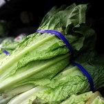 Photo of C.D.C. Reports More E. Coli Illnesses Linked to Romaine Lettuce