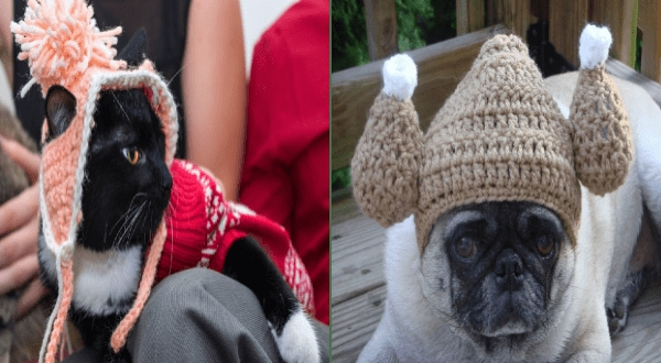 Photo of Warm And Stylish: The 2020 Crocheted Hat Collection For Pets Is Here