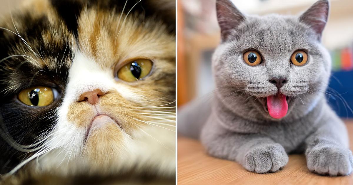 Кошки тоже выражают эмоции с помощью мимики. Просто мы их не замечаем
