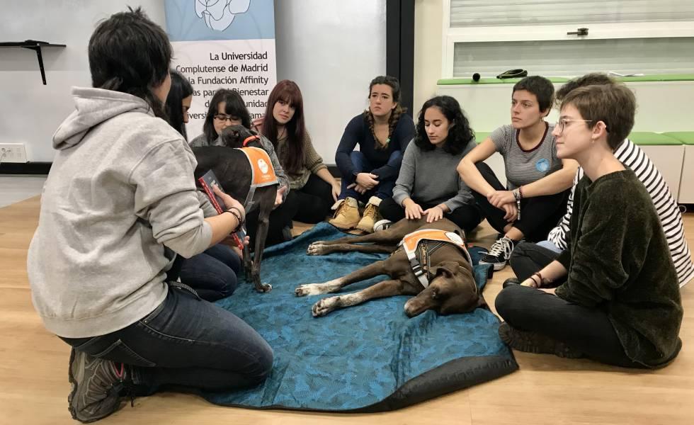 Photo of Terapias asistidas con perros y otras estrategias para evitar el estrés académico