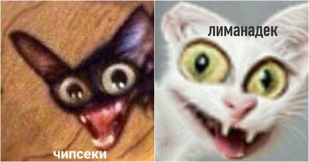 Чипсеки и сухареки - откуда этот мем с котом? Оригинал фото