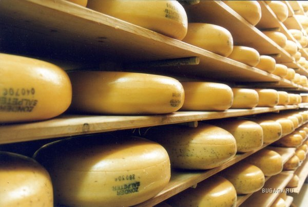 Фото Россельхознадзор снял ограничения на поставки сырных полуфабрикатов Рогачевского МКК