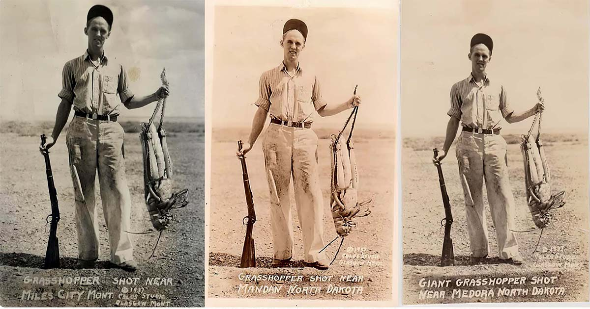 Фото В 1937 году фермер подстрелил метрового кузнечика. Правда или ложь?