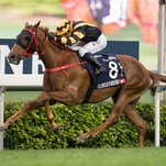 Hong Kong Horses Ready for All-Comers in Hong Kong Races