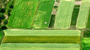 Закон о рынке земли не успеют принять до 2020