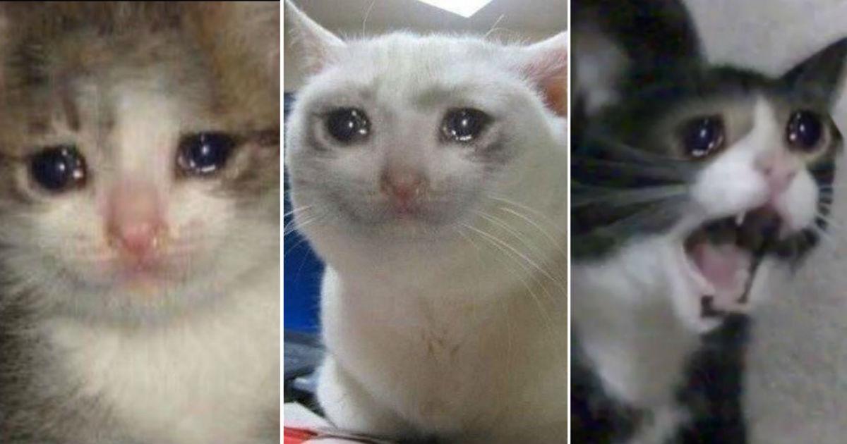 Фото Плачущий кот: котик плачет и орет - откуда мем? Варианты мемов