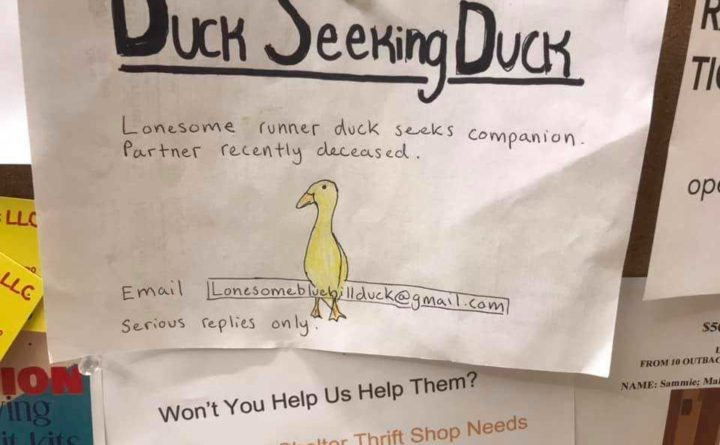 Photo of 'Duck seeking duck'