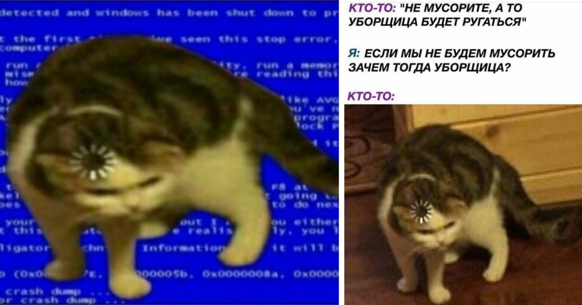 Фото Кот с загрузкой на голове - оригинал мема про зависшего кота с загрузкой