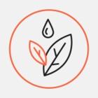 В «Аптекарском огороде» пройдет фестиваль лекарственных трав. На нем продегустируют чай с мухоморами