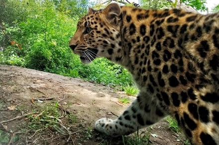 Photo of Google is monitoring animal populations with a giant network of wildlife cameras