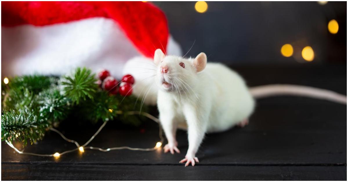 Фото Год белой крысы: как отмечать, что надевать и чего ждать от 2020 года
