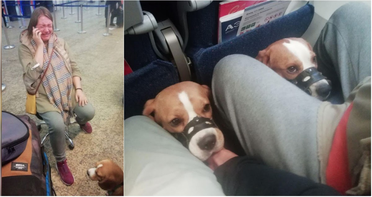 """""""Аэрофлот"""" довел до слез беременную пассажирку, отказав в перевозке двух собак"""