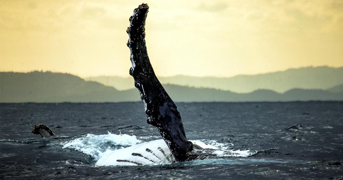 Ученые доказали, что гигантских морских чудовищ не существует