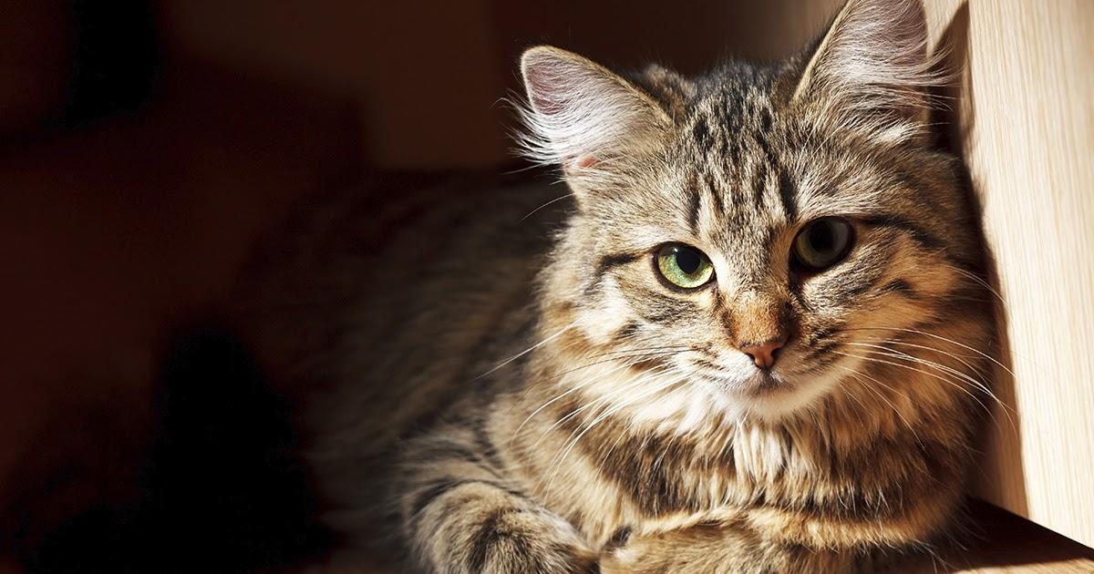 Фото Почему кошки ставят лапы на своих хозяев?