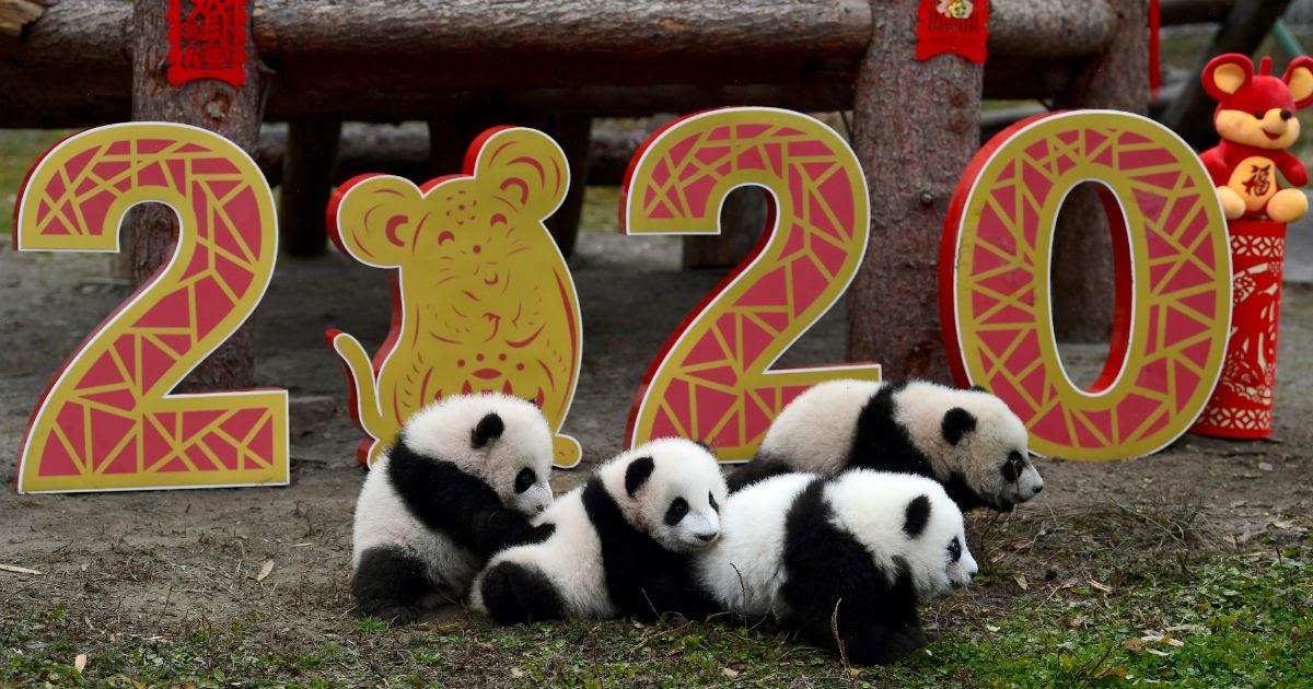 Китайский новый год 2020: когда начинается и как его праздновать