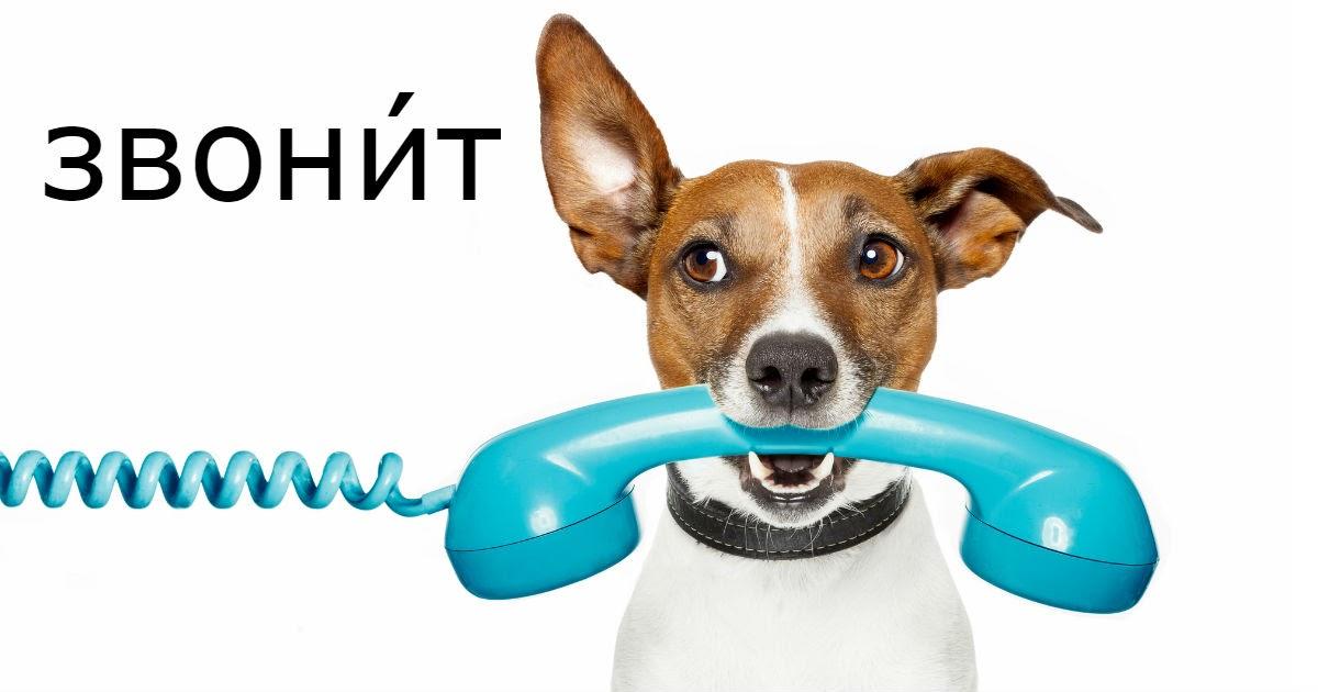 Фото ЗвонИт или звОнит: как правильно поставить ударение в слове звонит?