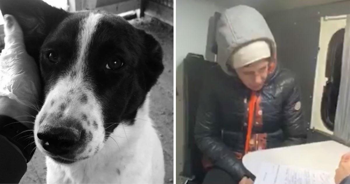 Фото Как мы съели собаку. Сахалинцы взяли пса из приюта и пустили на суп