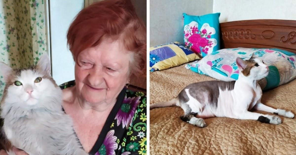 Пушистый герой. Кот спас 79-летнюю пенсионерку во время пожара