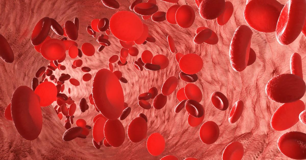 Эритроциты в крови - что это? Почему важен уровень эритроцитов?