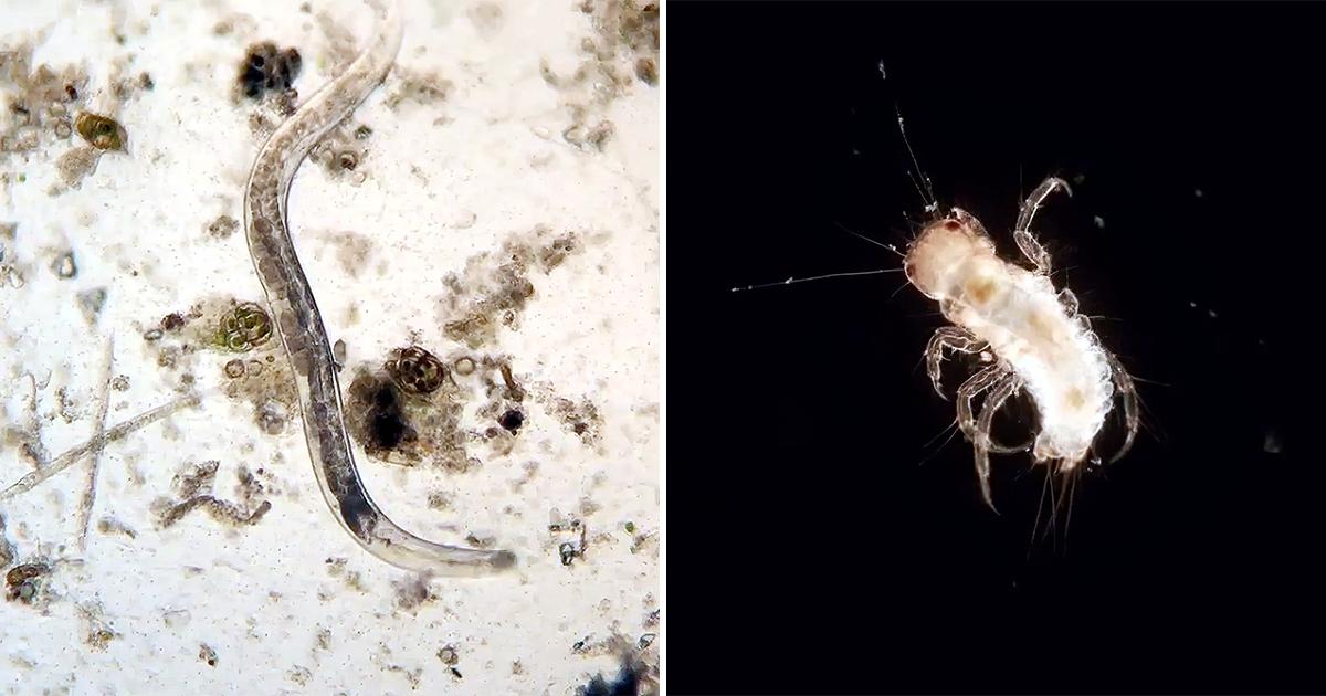 Микро-зоопарк. Как бактерии живут в ваших домах, пока вы их не видите