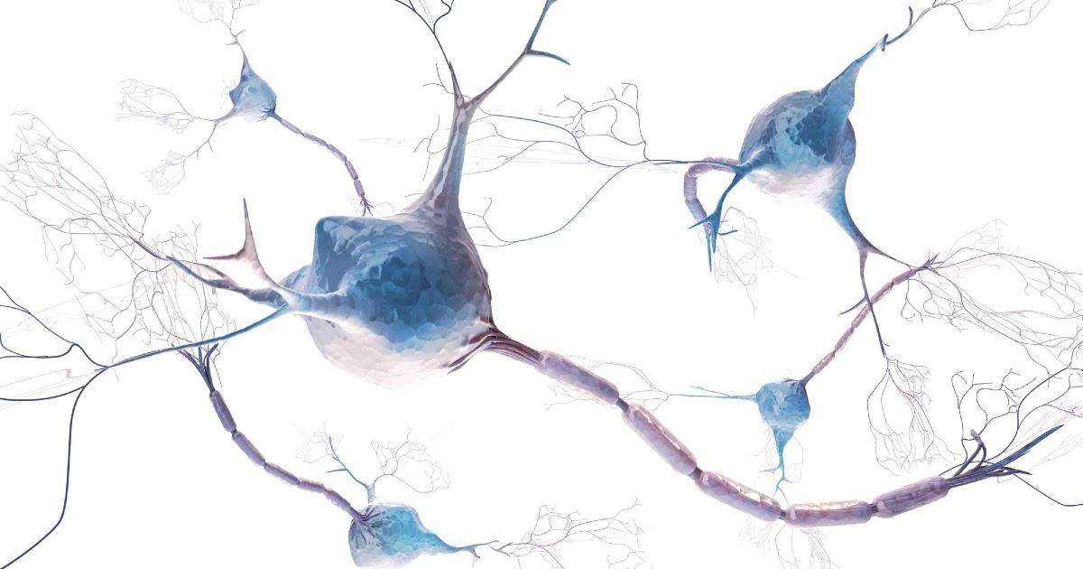 Что такое нейрон? Нейроны мозга - зачем они нужны? Что такое синапс?