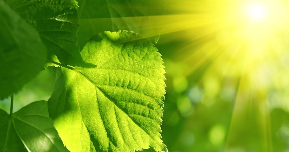 Фото Что такое фотосинтез? Как происходит процесс фотосинтеза