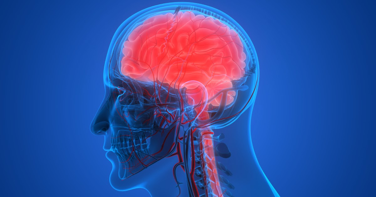 Фото Нервная система - что это такое? Какие функции у нервной системы?
