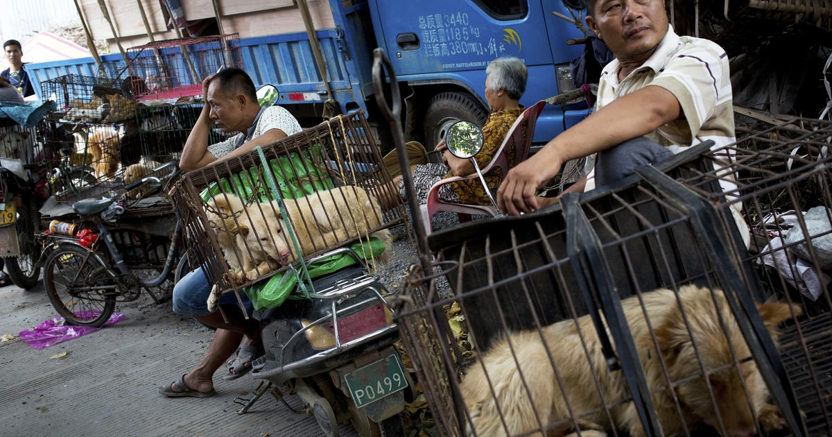Photo of China reclassifies dogs as pets, not livestock