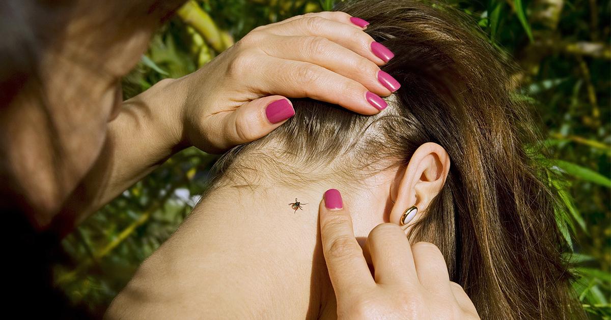 Мухи, комары и клещи переносят COVID-19? Научный сотрудник МГУ знает ответ
