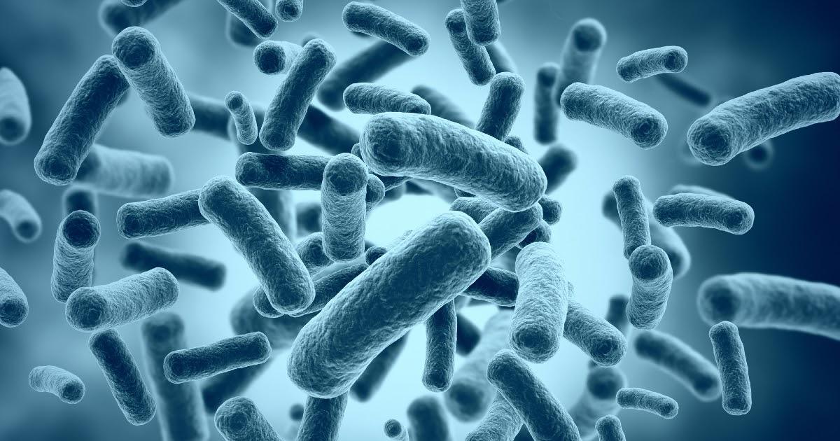 Фото Бактерии: что это такое, где находятся и как устроены. Польза и вред бактерий