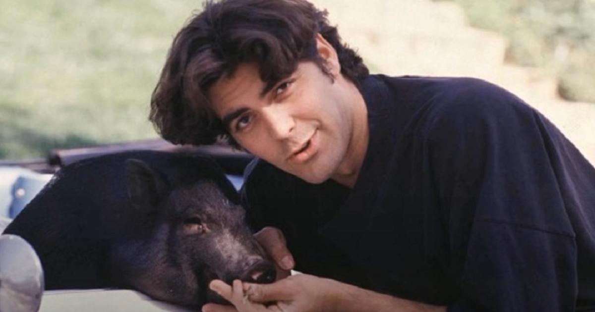 Как Джордж Клуни 18 лет прожил со свиньёй
