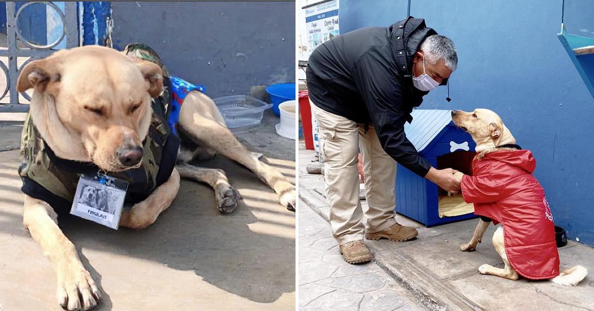 «Хатико» со счастливым концом. Пес сутками ждал хозяина около больницы