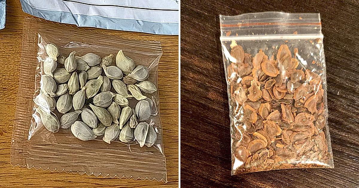 Американец посадил загадочные семена из Китая и рассказал, что вышло