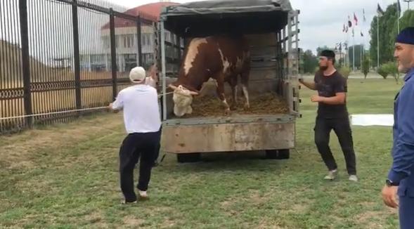 """Возле """"Ахмат-Арены"""" быка принесли в жертву в честь Кадырова-старшего"""