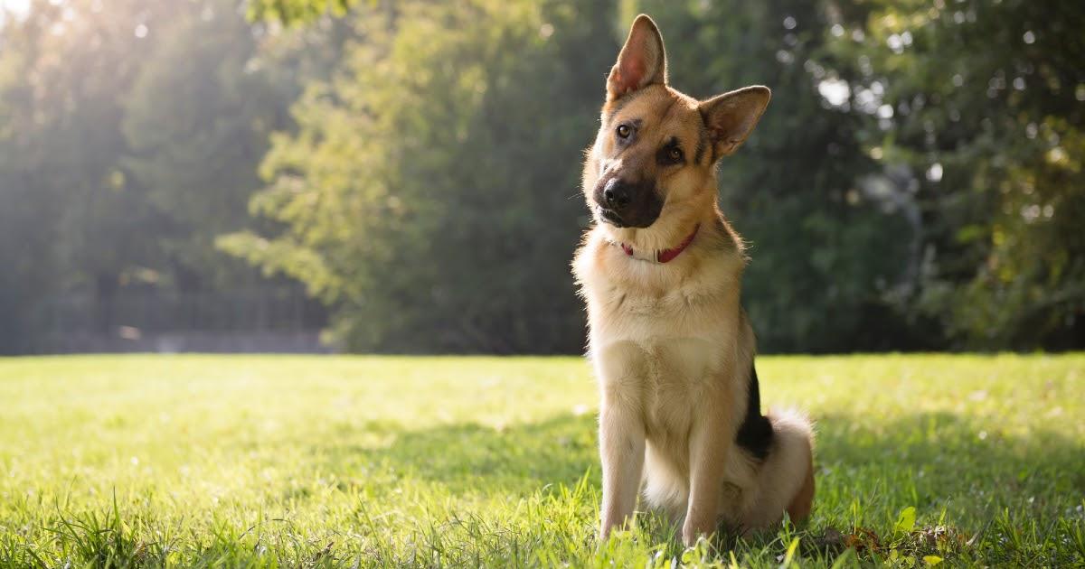 Сосед заколол собаку заточкой. Полиция и прокуратура возбуждать дело отказываются