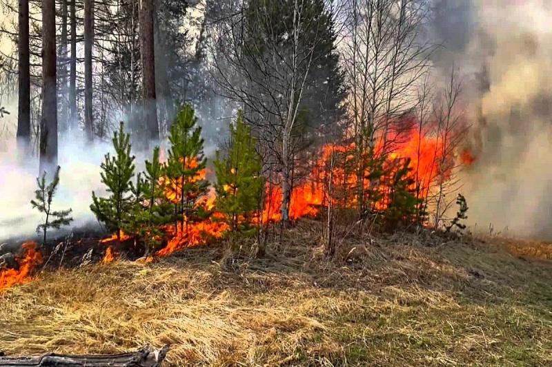 На Черноморском побережье Кубани потушили основную часть лесных пожаров