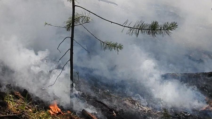 В Ростовской области эвакуировали хутор из-за природного пожара