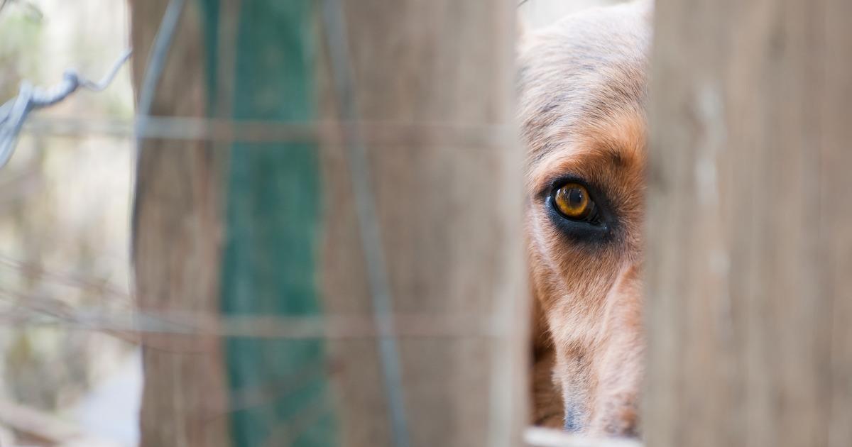Полиция возбудила уголовное дело против питавшейся собаками пенсионерки