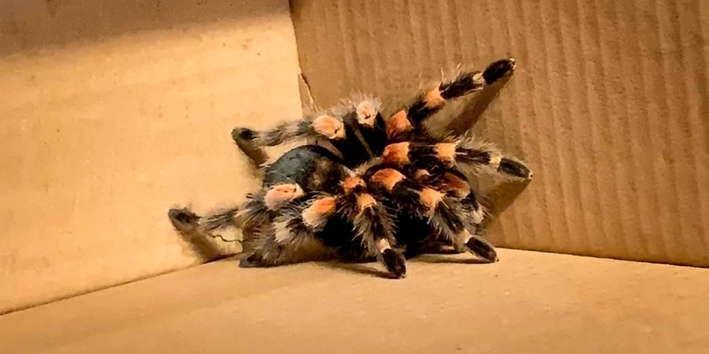"""Немецкая полиция """"арестовала"""" огромного паука, испугавшего пешеходов"""