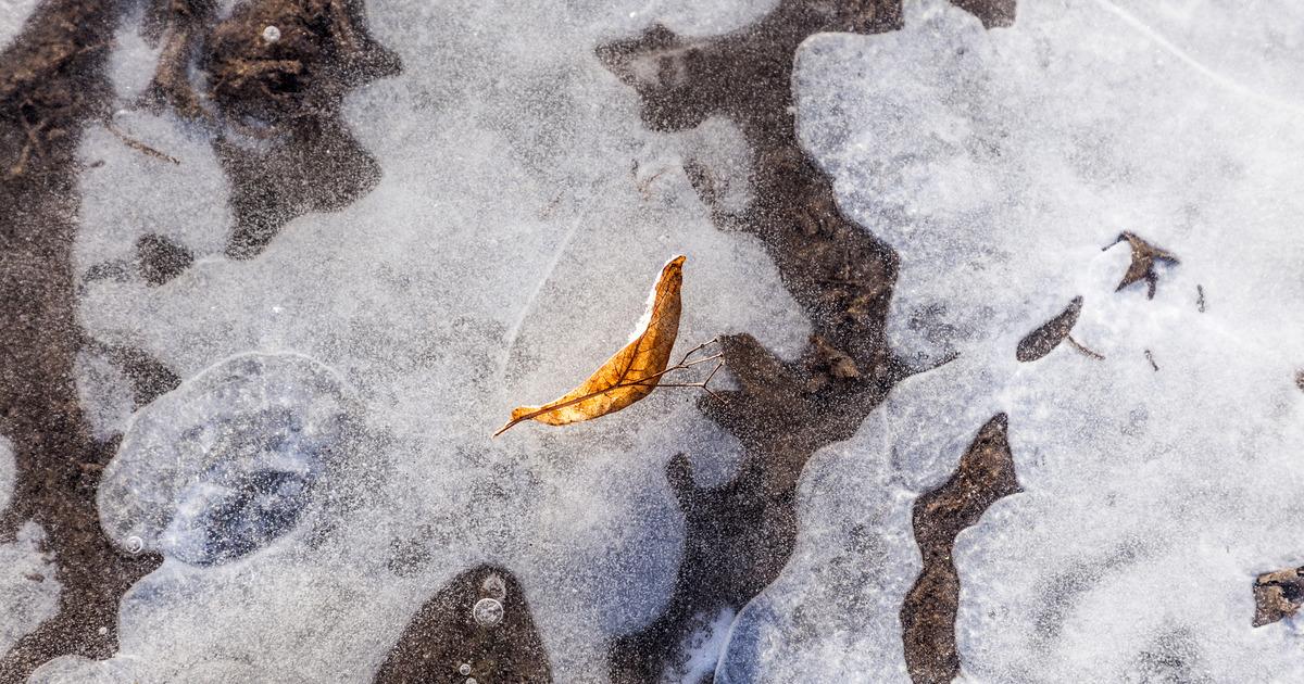 Первые заморозки придут в Москву на выходных