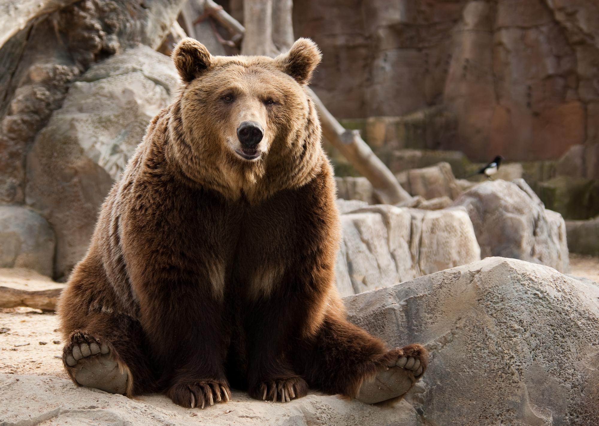 В цирке в Подмосковье медведь напал на дрессировщика и ребенка