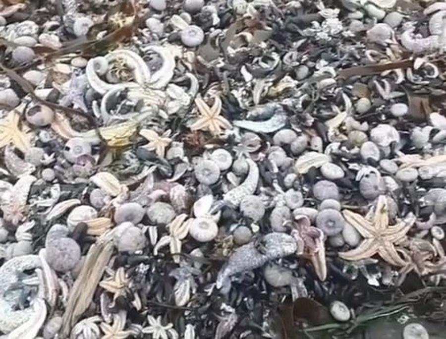 Ученые сообщили о гибели 95% обитателей дна Авачинской бухты