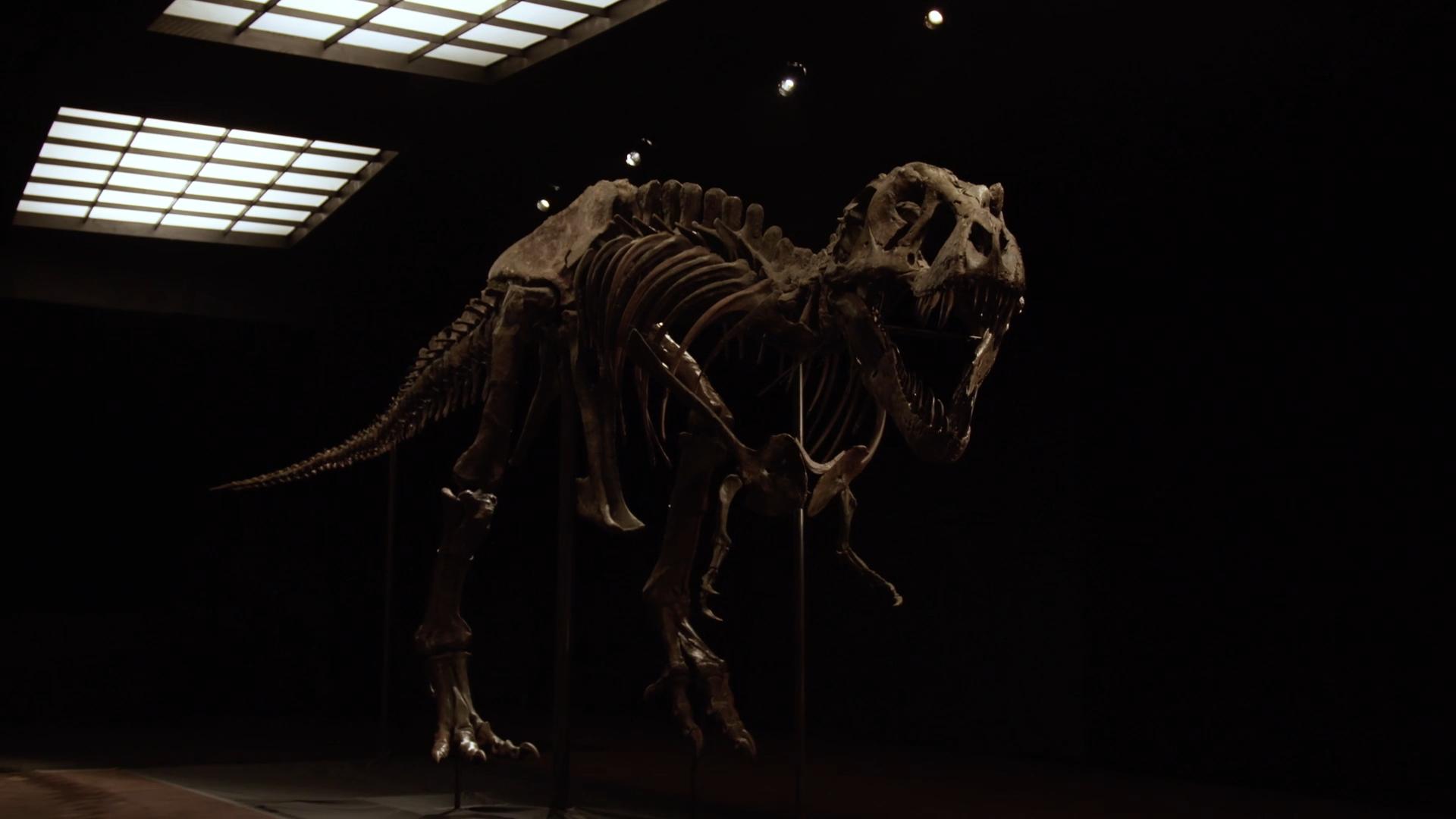 На аукционе за рекордную сумму продали скелет тираннозавра